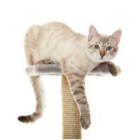 Macskafelszerelés